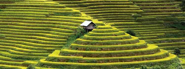 terrazas de arroz de Mu Cang Chai